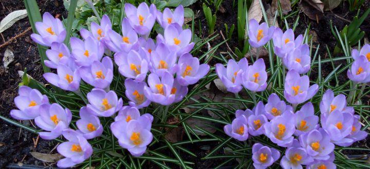 Gartenbepflanzung im Frühjahr